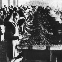 Donne al lavoro nella fabbrica Arrigoni di Cesena