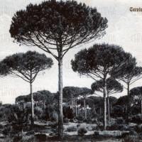 Fotografia storica della pineta di Cervia