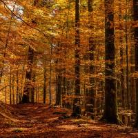 La foresta di Camaldoli